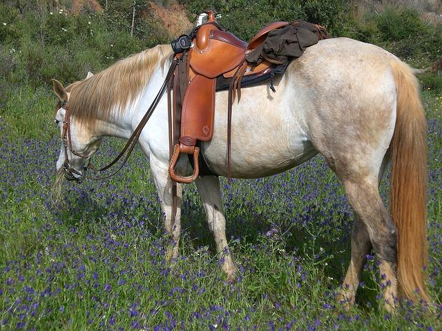 kůň s westernovým sedlem